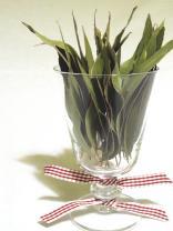 coupe-senteur-eucalyptus.les IDÉes d'ÉDIth