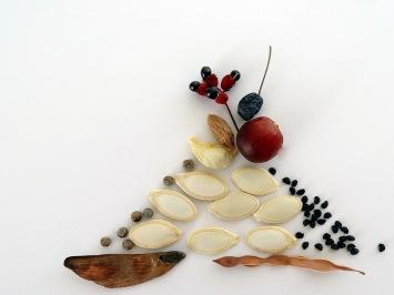 Des-fourmis-et-des-graines.Les-IDÉes-d'ÉDIth.com3