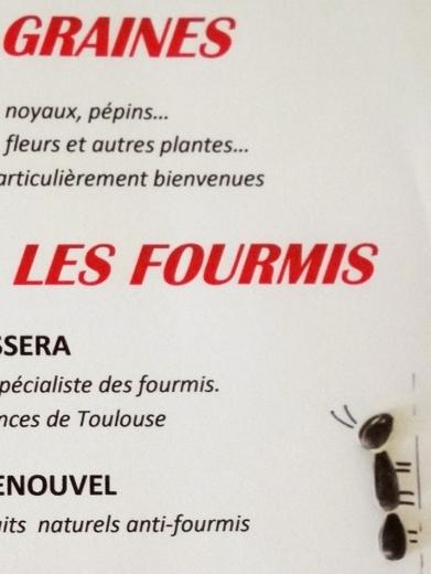 Des-fourmis&des-graines.Les-IDÉes-d'ÉDIth.3